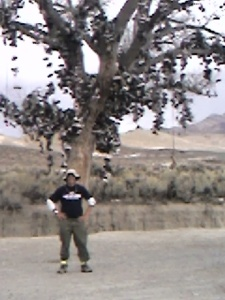 Under Nevada's Famous Shoe Tree